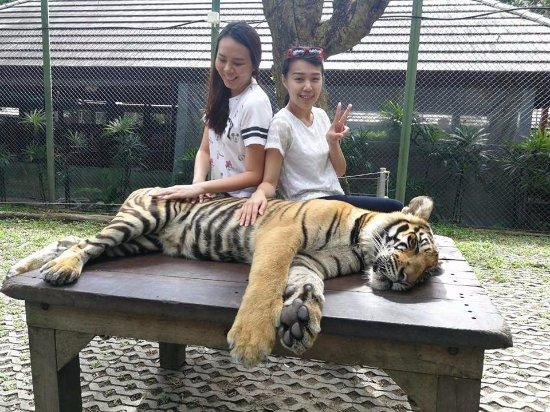 Phuket Taxi Private & Tours: Phuket Tiger Kingdom
