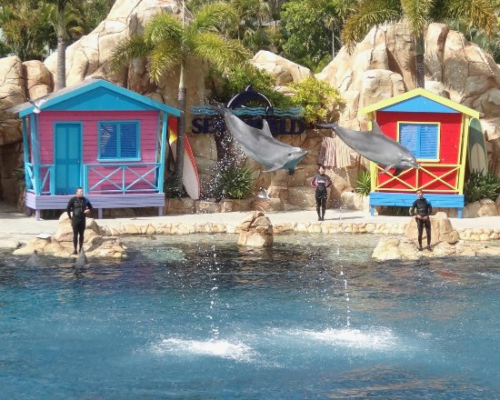 Sea World: Good dolphin show