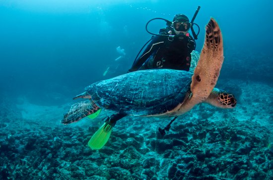 Puerto Baquerizo Moreno, Ecuador: Galapagos Booking Travel - Kiker Rock