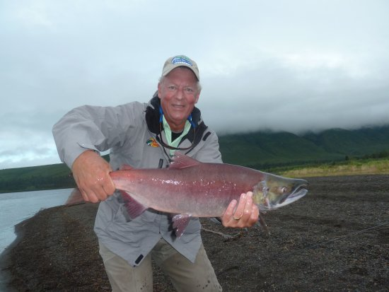 Dillingham, AK : Sockeye salmon