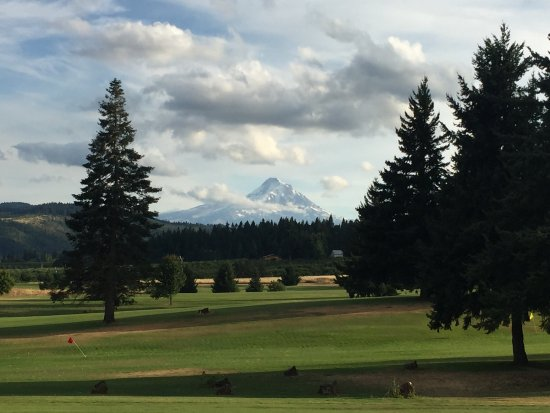 Hood River, OR: Mt Hood in the distance.
