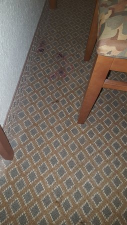 Days Inn San Antonio at Palo Alto: Stains on the floor