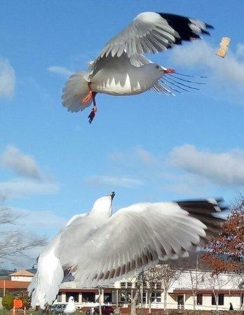 Lake Rotorua : At Lake Roturua. Feeding the birds