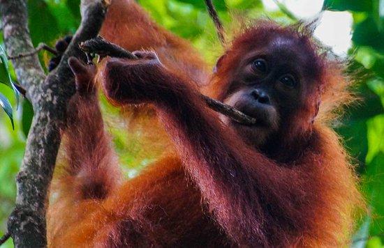 Bukit Lawang - Jungle Trekking