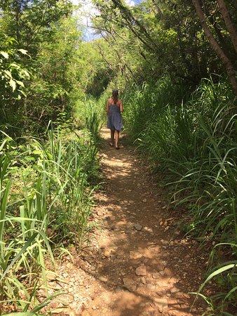 Caneel Bay, St. John: Lind point trail walk to honeymoon beach