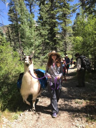 "Wild Earth Llama Adventures: Hiking with the lovely ""Mardi Gras"""