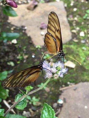 Monteverde Butterfly Garden (Jardin de Mariposas) : photo2.jpg
