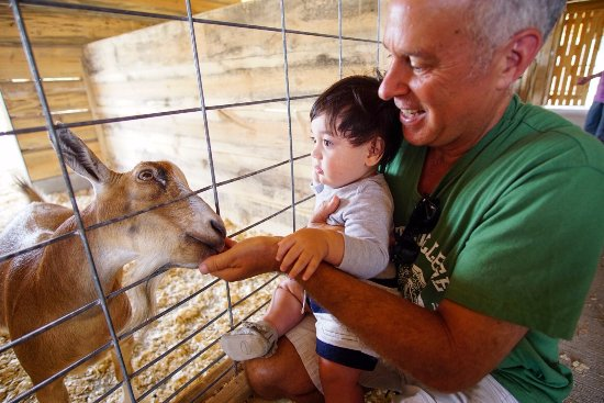 Vernon, Canada: friendly or hungry, goats?