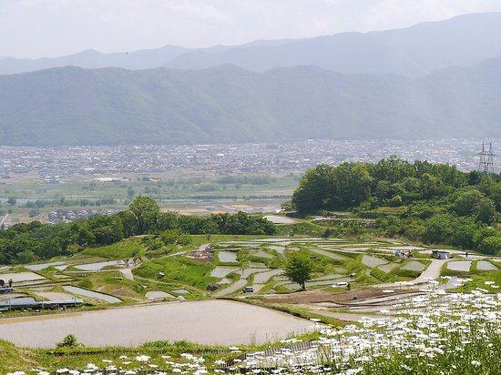 Obasute tanada (Terraced rice fields)
