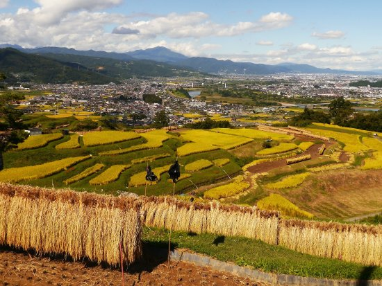 Obasute tanada (Terraced rice fields) : 秋(9月下旬)稲刈り Autumn (September to November) ; End of September is time of the harvest rice.
