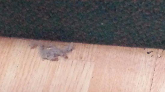 ภายใน, เซาท์ดาโคตา: dust bunny near our bed when we arrived