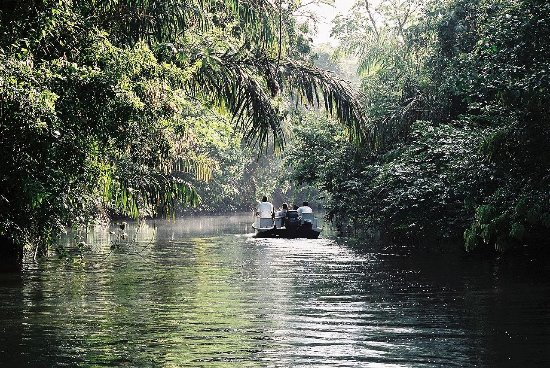 Ballena, Costa Rica: Tortuguero National Park Canal Morning Tour