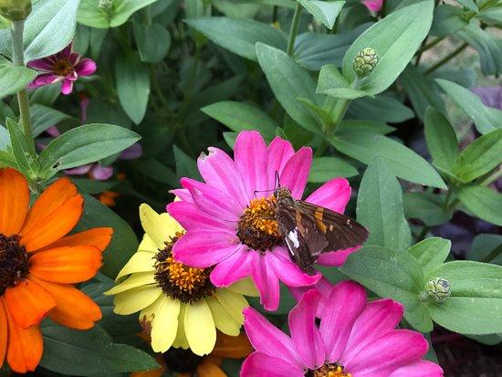 The North Carolina Arboretum: photo3.jpg
