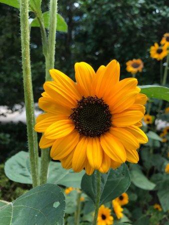 The North Carolina Arboretum: photo6.jpg
