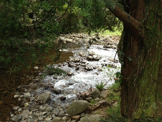 Katikati, Nya Zeeland: Stream