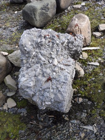 Cow Head, Canada: huge chunk of conglomerate