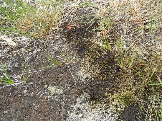 The Tablelands: brown moss turns green as soon as water is added