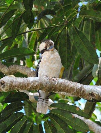 Malanda Falls Caravan Park Foto