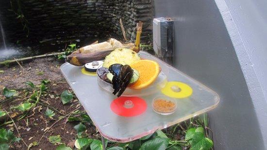 ARTIS Amsterdam Royal Zoo: butterfly garden