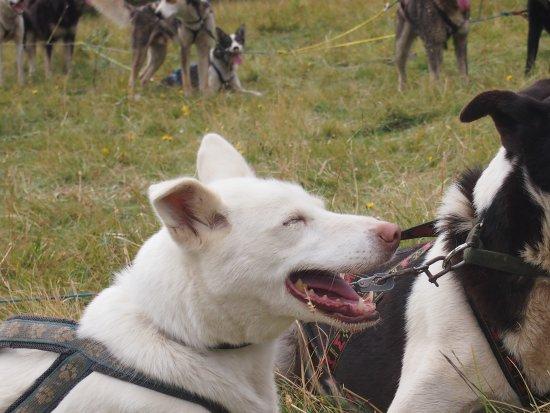 Øystre Slidre, Norge: The dogs