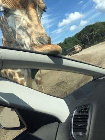 Hilvarenbeek, Países Bajos: Safari Park