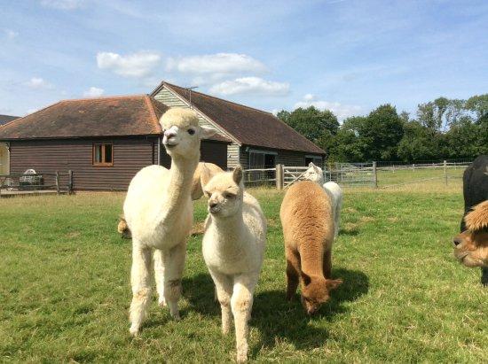 Fletching, UK: Babies