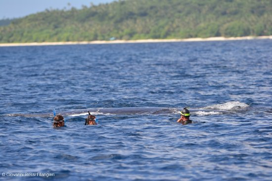 Dolphin Pacific Diving and Whale Watching: In acqua con le megattere