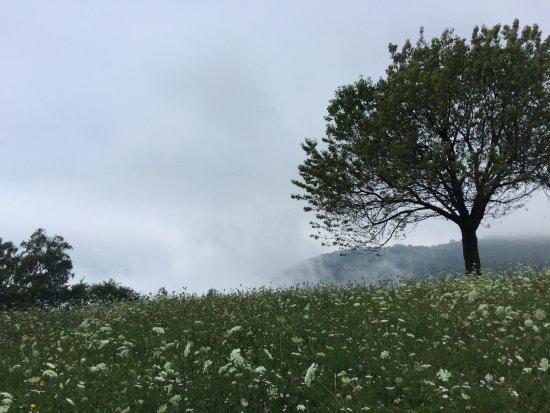 Zelbio, إيطاليا: Brume matinale
