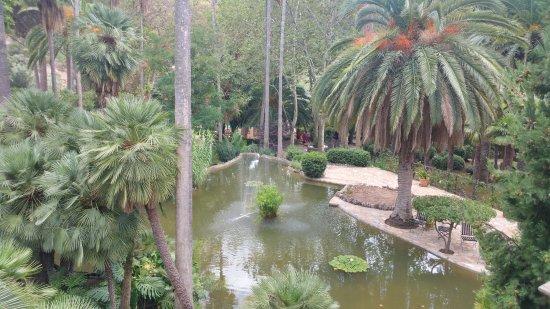 Jardins de Alfabia: Vue plongeante sur un bassin entouré de palmiers
