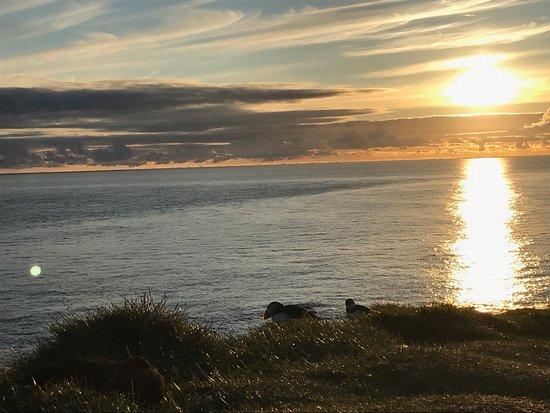 Latrabjarg, Island: photo0.jpg