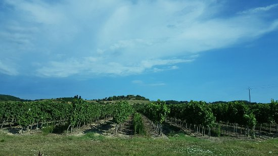 Mazamet, Frankrijk: Galliac wine country