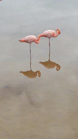 las fotos mas bellas de isla isabela galapagos