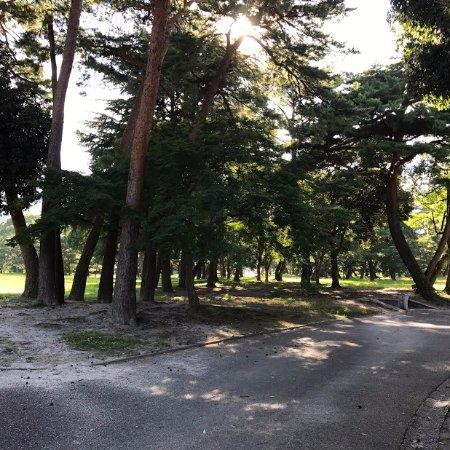 Beppu Park : 大きな松林の散策コースが続きます