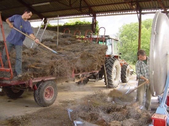 Chamaloc, France: la lavande est mise dans des cuves pour être distillée.