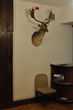 Foto de Hotel Daugavkrasti