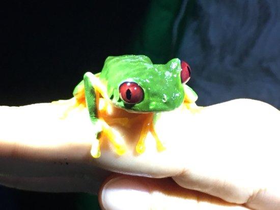 Costa Rica Jade Tours: photo0.jpg
