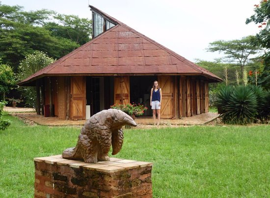 Kasese, Uganda: Pangolin in front of gallery