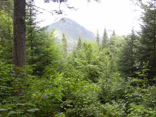 Stoneham-et-Tewkesbury, Canada: Les Loupes trail