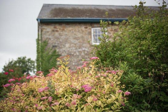 Newport -Trefdraeth, UK: view of the neighboring building through the gardens