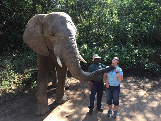 Hazyview, Sudáfrica: Küsschen vom Elefanten