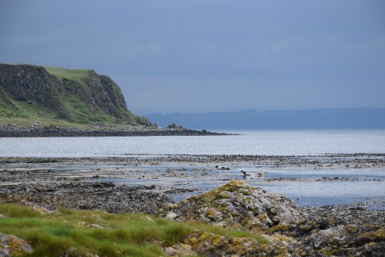 Rathlin island with seals