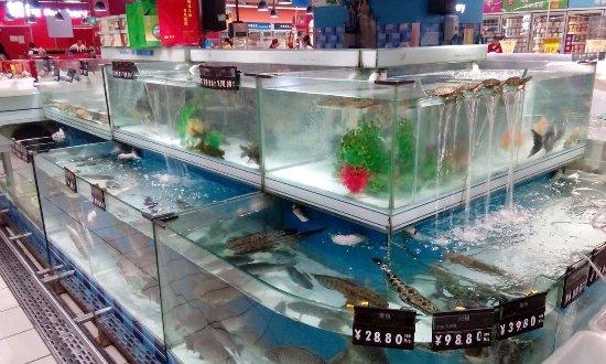 Carrefour (Zhongshan Park): рыбная витрина