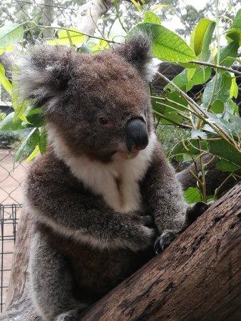 Nowra, Australia: IMG_20170815_112402_large.jpg
