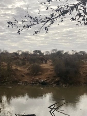 Madikwe Game Reserve, Sudáfrica: Elephants across the river...view from our room/suite/lodge
