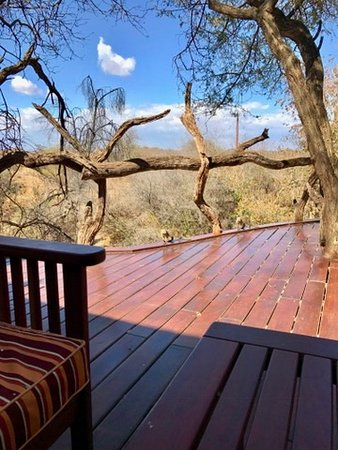 Madikwe Game Reserve, Sudáfrica: Mongooses on the main lodge deck