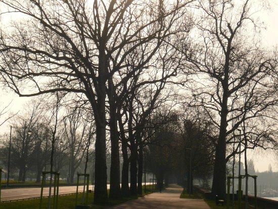 Rheinuferpromenade: Winterliche Stimmung am Rheinufer