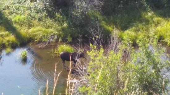 Moose, WY: 20170731_095934_large.jpg