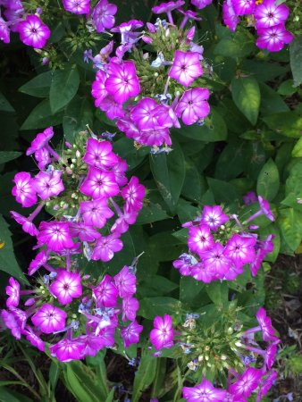 Fair Haven, VT: Summer flowers around property