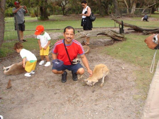 Whiteman, Austrália: ....mingling with the kangaroos
