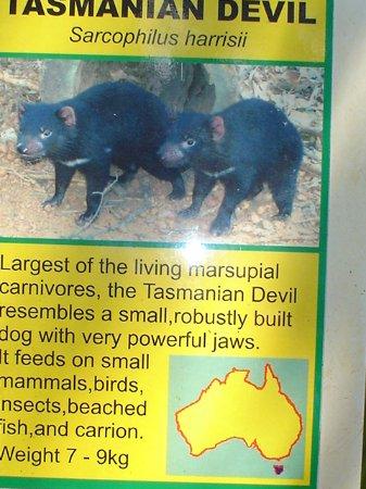 Whiteman, Austrália: .....sad-lii didn't get to see this one also